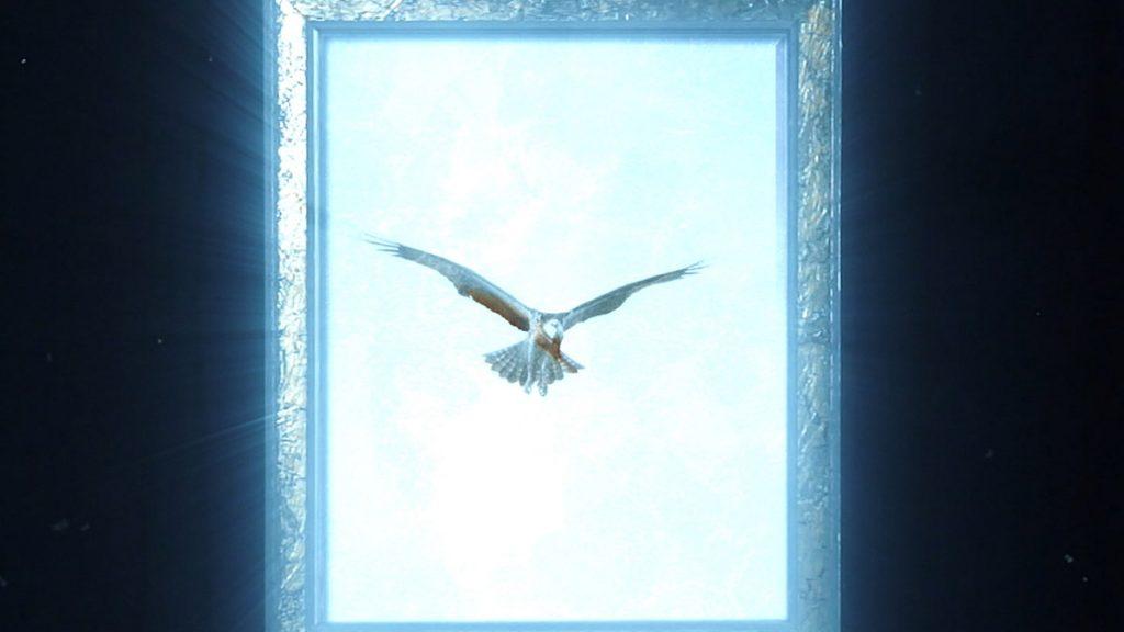 Roby Falco 17